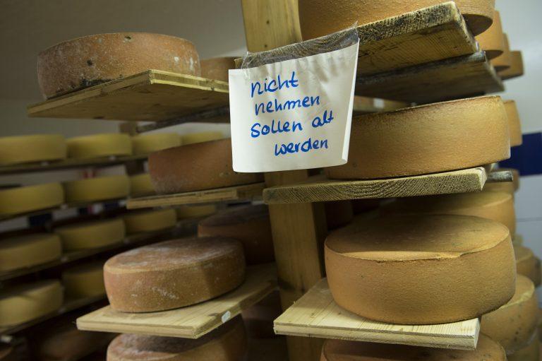 Käse im Lager der Jithofer Käserei