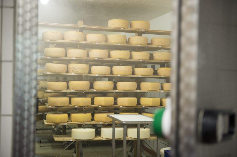 Das Käselager der Jithofer Käserei